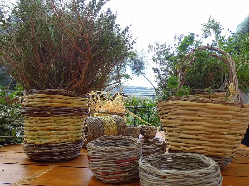 Cesti di diverse grandezze contenenti erbe aromatiche
