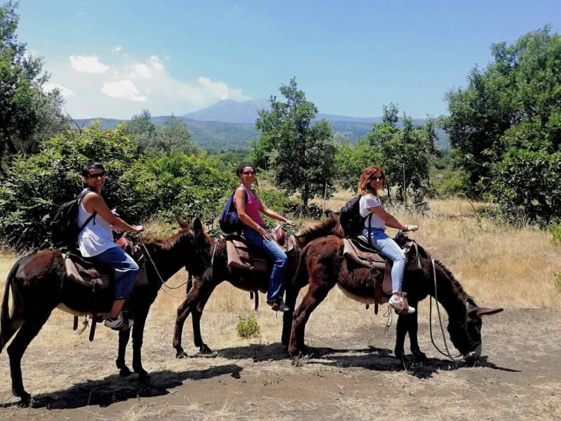 etna donkey isolani per caso