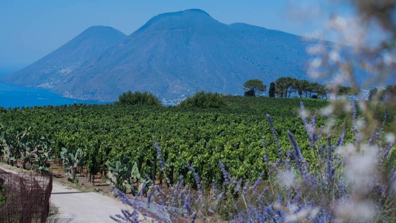 Vino & Caolino