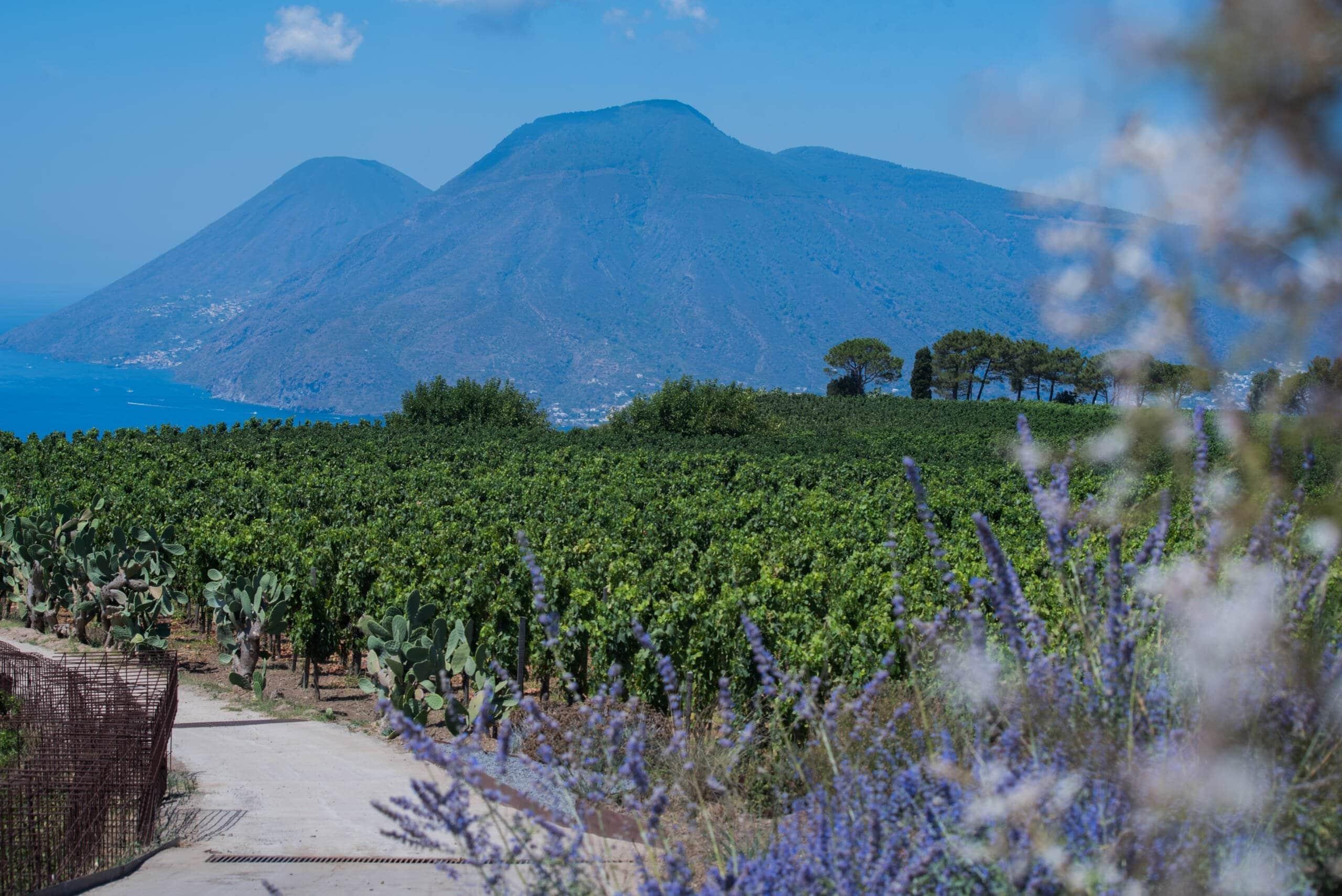 Vigneto, fiori e sfondo isole eolie