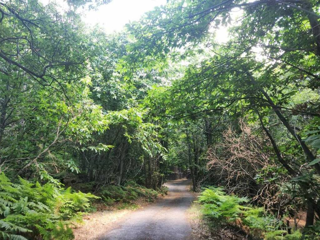 Strada immersa nel bosco