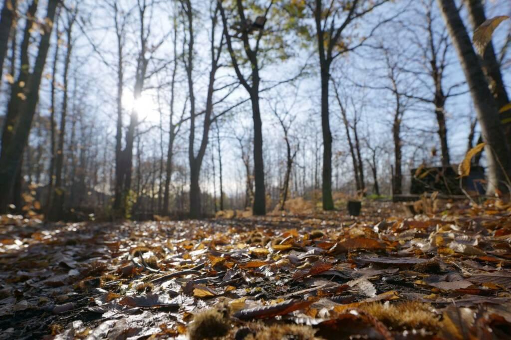 Alberi, foglie, ricci di castagne
