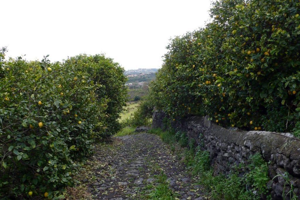 viale con alberi di agrumi