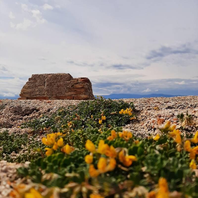 fiori gialli e sullo sfondo muro di cinta del castello