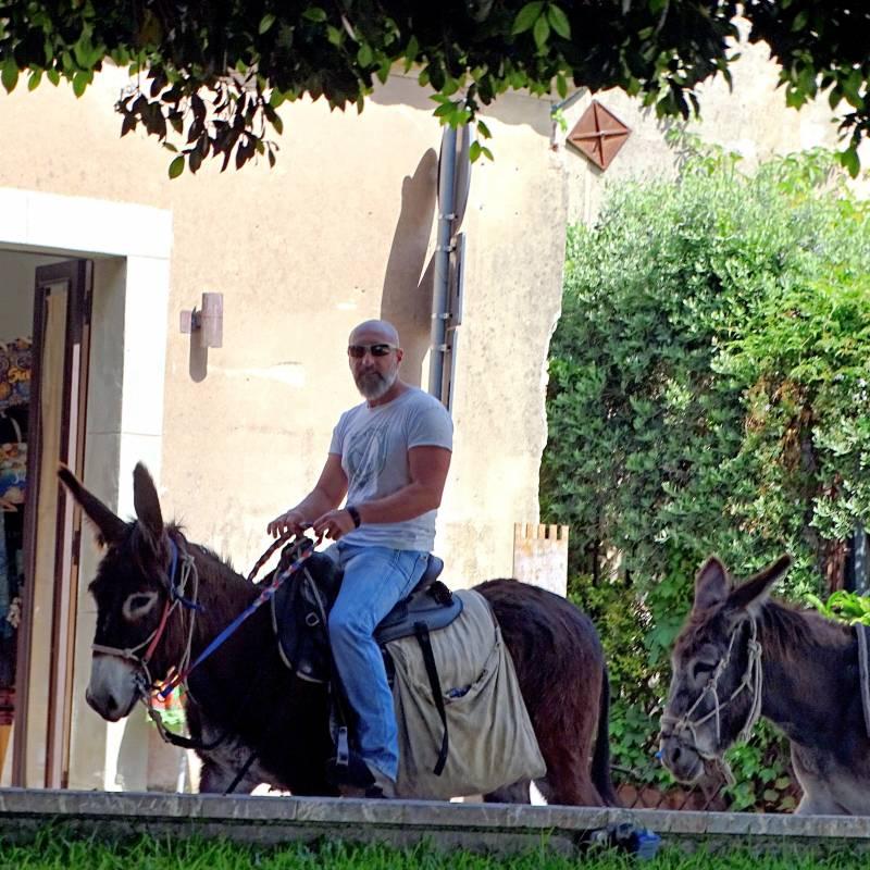 Salvo on the donkey